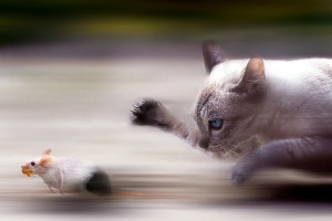 cat_chase_mouse